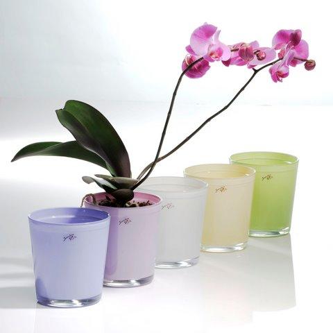orchideen t pfe. Black Bedroom Furniture Sets. Home Design Ideas